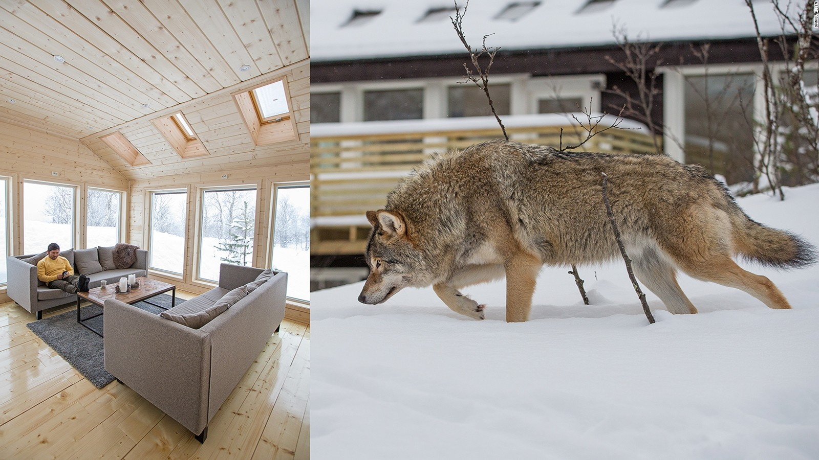 Opened in late 2015 at the Polar Park, Wolf Lodge is the world's first luxury accommodation situated inside an enclosure of wolves. Guests are often treated to a dramatic chorus of nocturnal howling, with the animals frequently approaching the lodge's large glass windows during the day and night.
