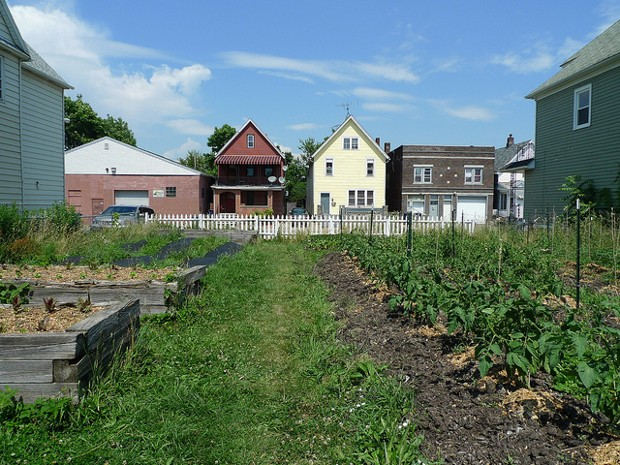 How to Build a Safer Urban Garden