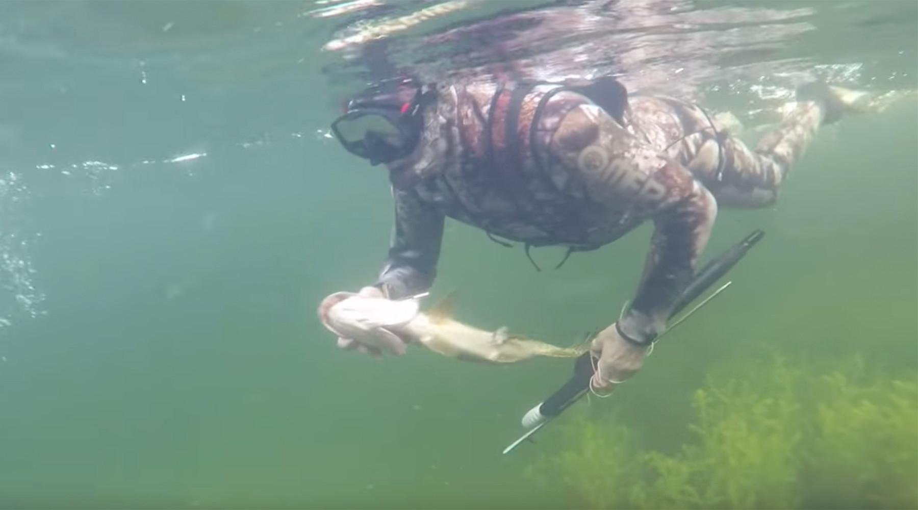 охота и рыбалка под водой видео
